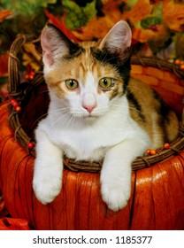 Kitten in autumn basket