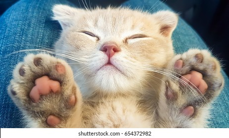 Kitten Baby Cat