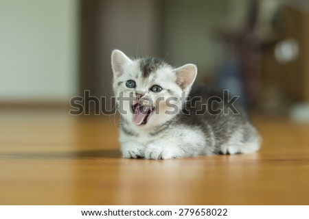Kitten Baby Cat Little Cute Cat Stock Photo Edit Now 279658022