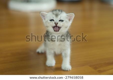 Kitten Baby Cat Little Cute Cat Stock Photo Edit Now 279658058
