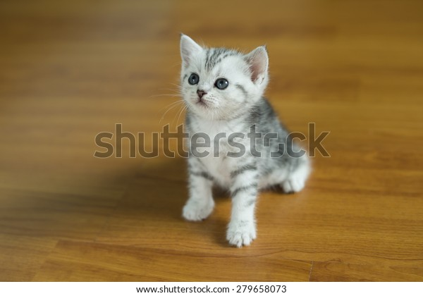 Kitten Baby Cat Little Cute Cat Animals Wildlife Stock Image 279658073