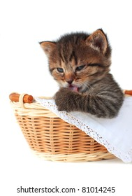 Kitten in a basket of grey color on a white background