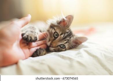 kitten bite human hand