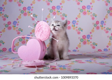 Kitten bites pink heart background Wallpaper