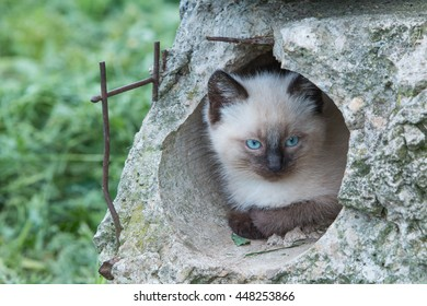 Kitten with blue eyes in old building panel.