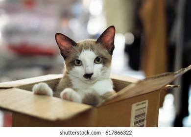 Kitten in a box