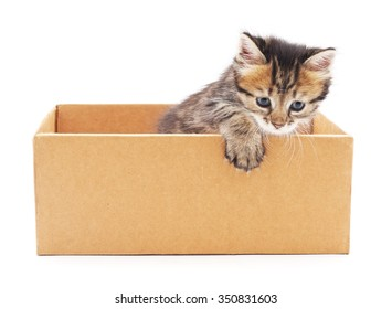 Kitten in the box on a white background.