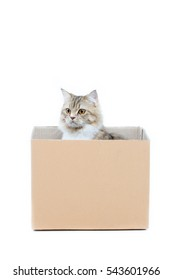 Kitten in the box on a white background