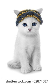 Kitten of the British breed. Rare coloring - a silvery chinchilla ?