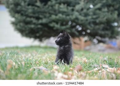 Cat Rescue Images, Stock Photos & Vectors   Shutterstock
