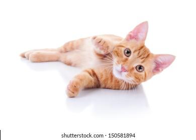 Kitten cat on white background