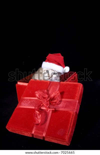 Kitten in Christmas gift box wearing red hat isolated on black background