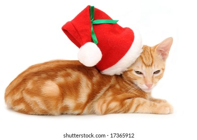 Kitten with christmas hat in isolated white background