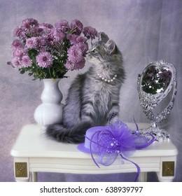 Kitten and chrysanthemums