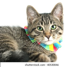 Kitten with a colorful collar