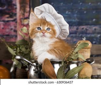 Kitten in a cook's cap, Cat cook