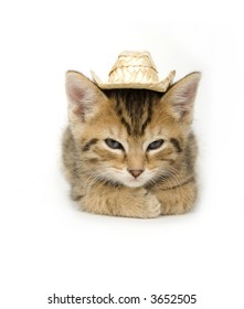 A kitten with a cowboy hat on a white background