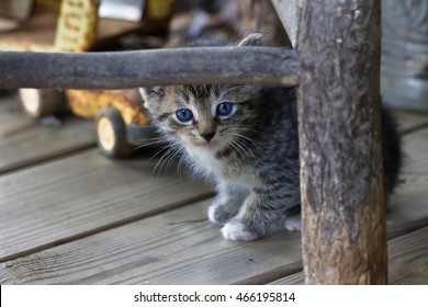 Kitten with Cute Face Looking Straight Ahead