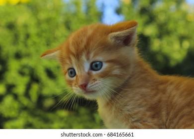 Kitten. Cute kitten in the park. Kitten over nature background. Cropped shot of kitten.