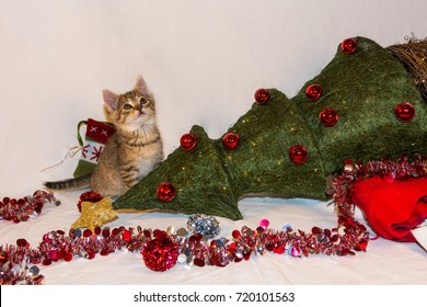 Kitten Destroys Christmas