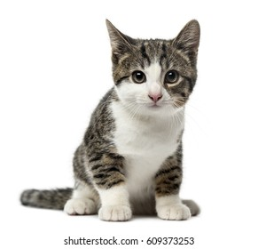 Cats No Background Images, Stock Photos \u0026 Vectors