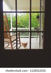 Kitten at the door
