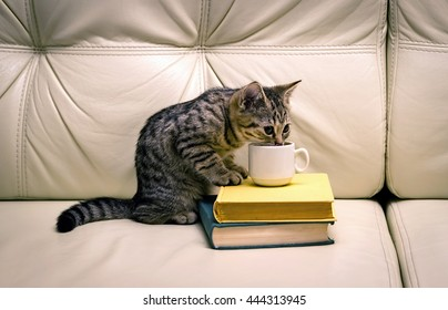 Cats Drinking Tea Images, Stock Photos & Vectors | Shutterstock
