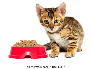kitten and dry food on white background