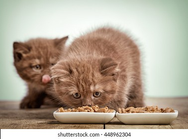 kitten eating cats food, selective focus