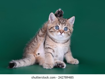 Kitten is engaged in gymnastics