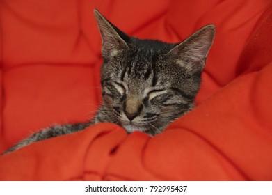 Kitten enjoying its sleep.