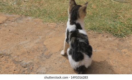 kitten enjoying sunshine sited on concrete