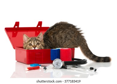 Kitten with first aid kit