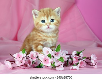 kitten-flowers-on-pink-background-260nw-
