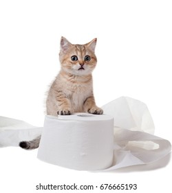 A kitten with frightened eyes is standing on a roll of toilet paper. Isolated on white background