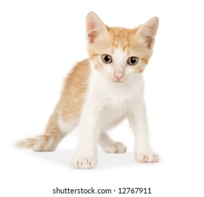 Kitten in front of a white background