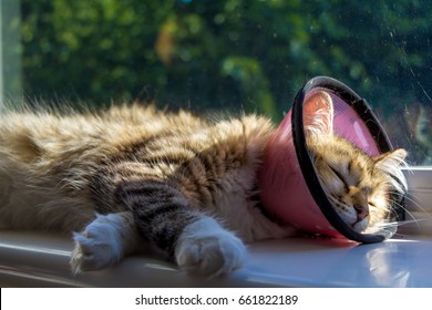 A kitten with a funnel cone post-surgery lazing in the sun
