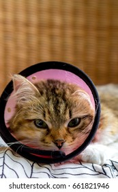A kitten with a funnel cone post-surgery sitting on a cushion on a wicker basket