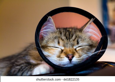 A kitten with a funnel cone post-surgery sleeping