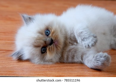 the kitten is funny
