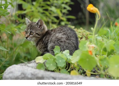 Kitten in a garden