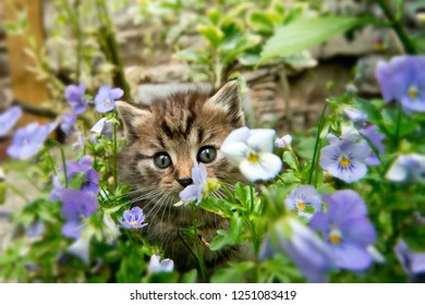 Kitten in the garden in the flowers