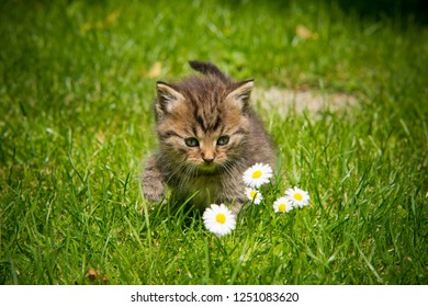 kitten in the garden in the grass