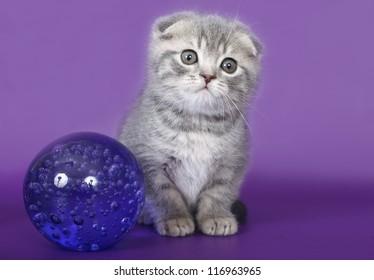 Kitten with a glass ball.