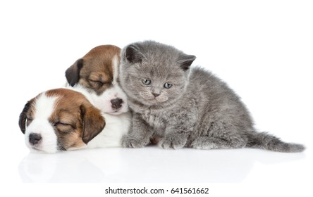 Kitten and a group of sleeping puppies Jack Russell.  isolated on white background