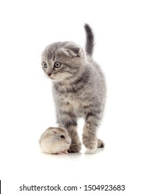 Kitten and hamster isolated on a white background.