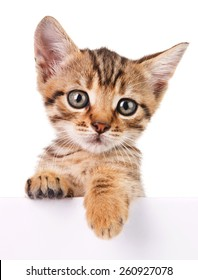 Kitten hanging over blank poster-board