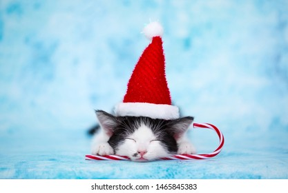 The kitten in the hat of Santa Claus lies on a blue background. Festive concept of the new year. Cute pet sleeps on Christmas Eve. Christmas greetings gifts and surprises. Background with copy space.