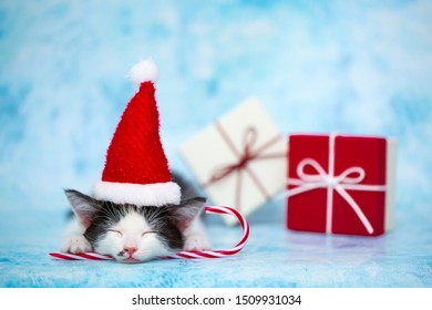 The kitten in the hat of Santa Claus lies on gift boxes. Festive concept of the new year. Blue background with copy space for text. Cute pet sleeps on gifts on Christmas Eve. Christmas surprises.
