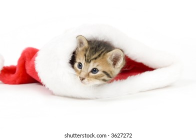 A kitten hides in a santa claus hat on a white background